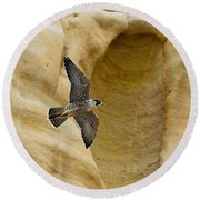 Peregrine Falcon Flying By Cliff Round Beach Towel