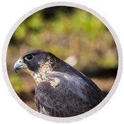 Peregrine Falcon Round Beach Towel