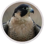 Peregrine Profile Round Beach Towel