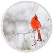 Perfect Cardinal Round Beach Towel