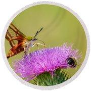 Perfect Hummingbird Moth Round Beach Towel