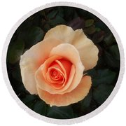 Perfect Peach Rose Round Beach Towel