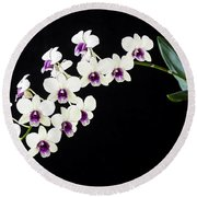 Perfect Phalaenopsis Orchid Poster Round Beach Towel