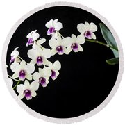 Perfect Phalaenopsis Orchid Round Beach Towel