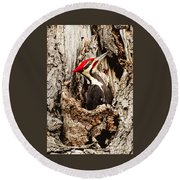 Perfect Pileated Pose Round Beach Towel