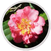 Perfect Pink Camellia Round Beach Towel