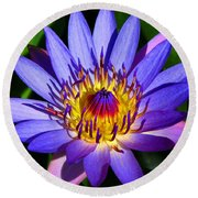 Perfect Water Lily Round Beach Towel