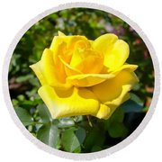 Perfect Yellow Rose Round Beach Towel