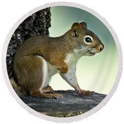 Perky Squirrel Round Beach Towel