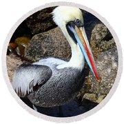 Peruvian Pelican Round Beach Towel