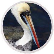 Peruvian Pelican Portrait Round Beach Towel