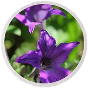 Petunia Hybrid From The Sparklers Mix Round Beach Towel