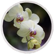 Phal Ming Chao Dancer 0754 Round Beach Towel