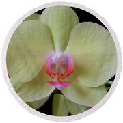 Phalaenopsis Fuller's Sunset Orchid No 2 Round Beach Towel