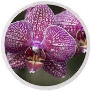 Phalaenopsis Helen Alice Mary 2220 Round Beach Towel