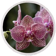 Phalaenopsis Helen Alice Mary 2346 Round Beach Towel