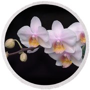 Phalaenopsis Orchid Round Beach Towel