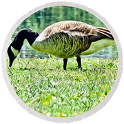 Philly Goose In The Grass Round Beach Towel