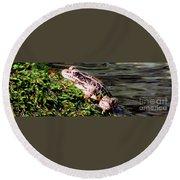 Pickerel Frog Round Beach Towel