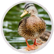 Picture Perfect - Mallard Duck Round Beach Towel