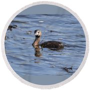 Pied-billed Grebe Round Beach Towel