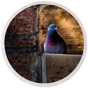 Pigeon Of The City Round Beach Towel