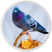 Pigeon On Sunflower Round Beach Towel