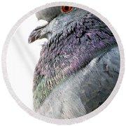 Pigeon Portrait Round Beach Towel
