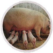 Momma Pig And Piglets Round Beach Towel by Terry DeLuco