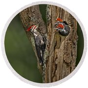 Pilated Woodpecker Family Round Beach Towel by Susan Candelario