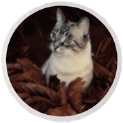 Rustic Pile Of Leaves And Cat Round Beach Towel