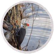Pileated Woodpecker Winter Round Beach Towel