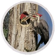 Pileated Woodpecker And Chick Round Beach Towel