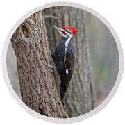 Pileated Woodpecker Foraging Round Beach Towel