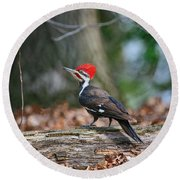 Pileated Woodpecker On Log Round Beach Towel