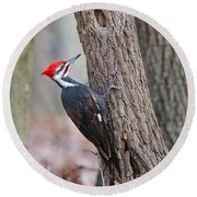 Pileated Woodpecker On Tree Round Beach Towel