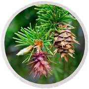 Pine Cone Stages Round Beach Towel