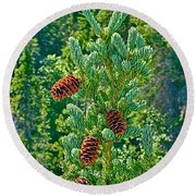 Pine Cones On Spruce Tree In Rancheria Falls Recreation Site-yt Round Beach Towel