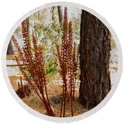Pine Drops And Ponderosa Pine In Des Chutes Nf-or  Round Beach Towel