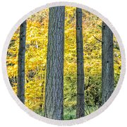 Pine Forest In The Autumn Round Beach Towel