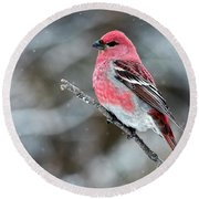 Pine Grosbeak  Pinicola Enucleator Round Beach Towel