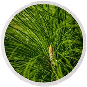 Pine Needles Round Beach Towel