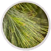 Pine Tree Needles Round Beach Towel