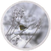 Pine Warbler In The Snow - Better Than Red Round Beach Towel
