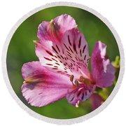 Pink Alstroemeria Flower Round Beach Towel