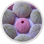 Pink And Green Urchins Round Beach Towel
