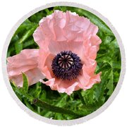 Pink And Purple Poppy Round Beach Towel