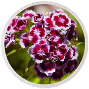 Pink And White Carnations Round Beach Towel