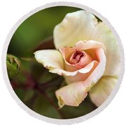 Pink And White Rose Round Beach Towel