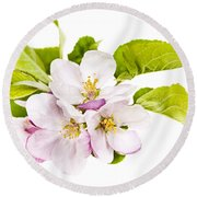 Pink Apple Blossoms Round Beach Towel by Elena Elisseeva